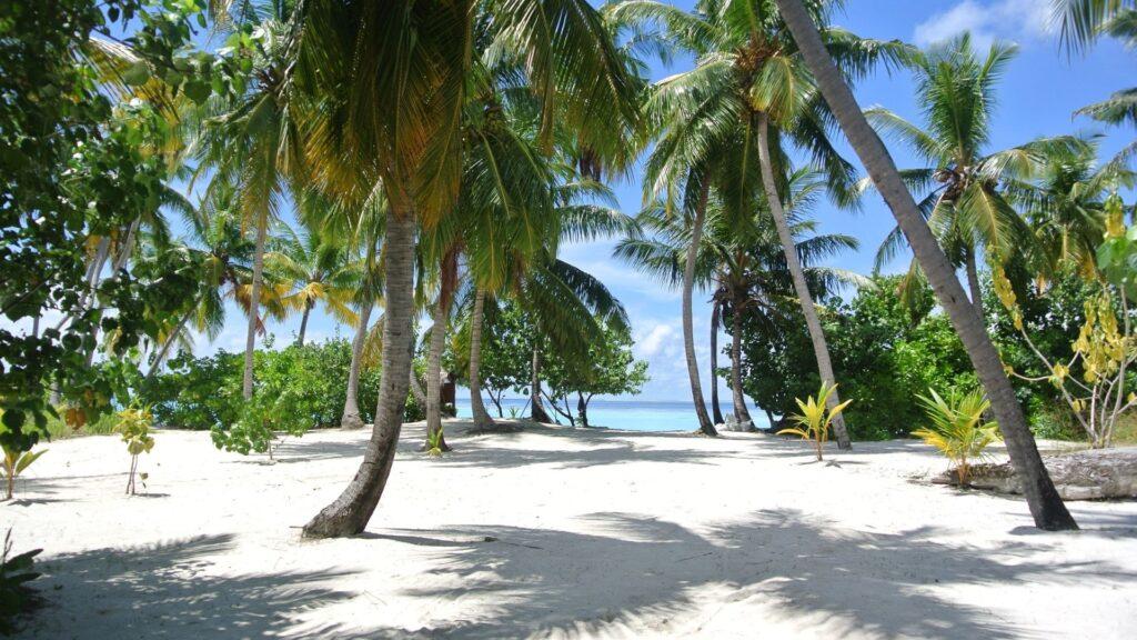 Palma-Palm-Islands-a-Dubai-2022-foto-e-occasioni-immobiliari..
